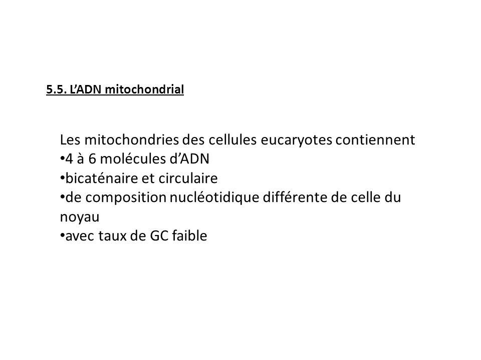 Les mitochondries des cellules eucaryotes contiennent