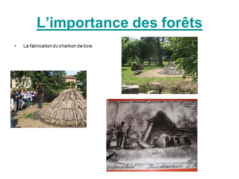 L'importance des forêts
