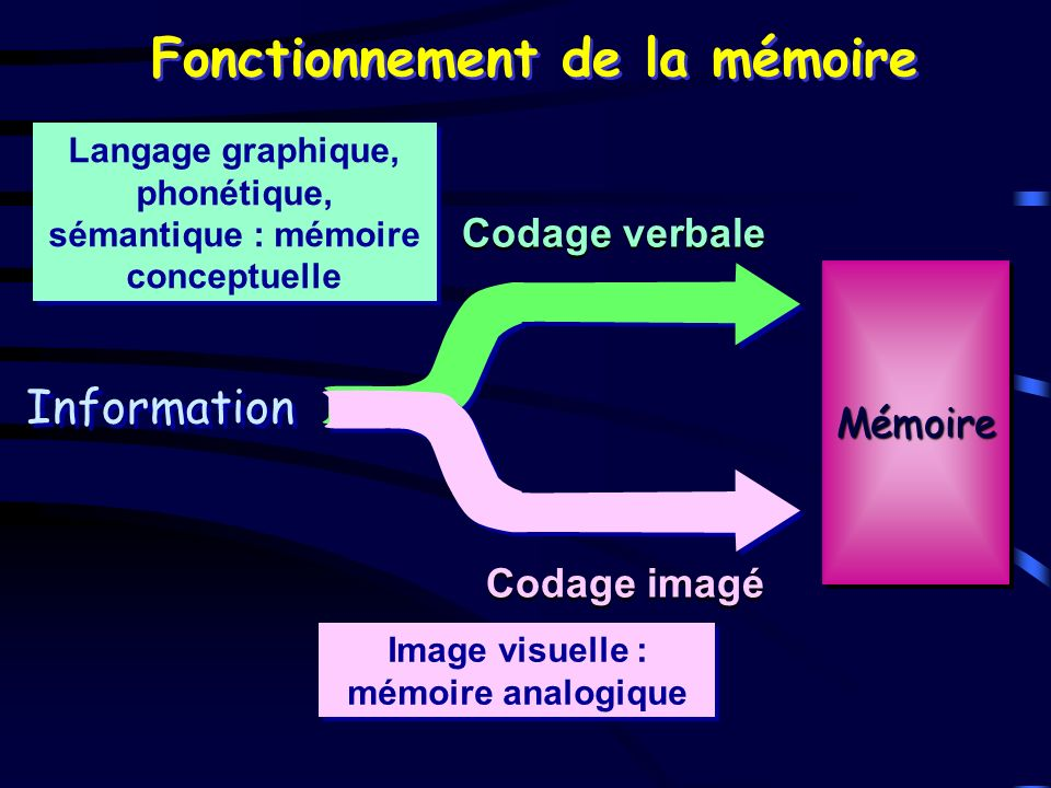 Fonctionnement de la mémoire