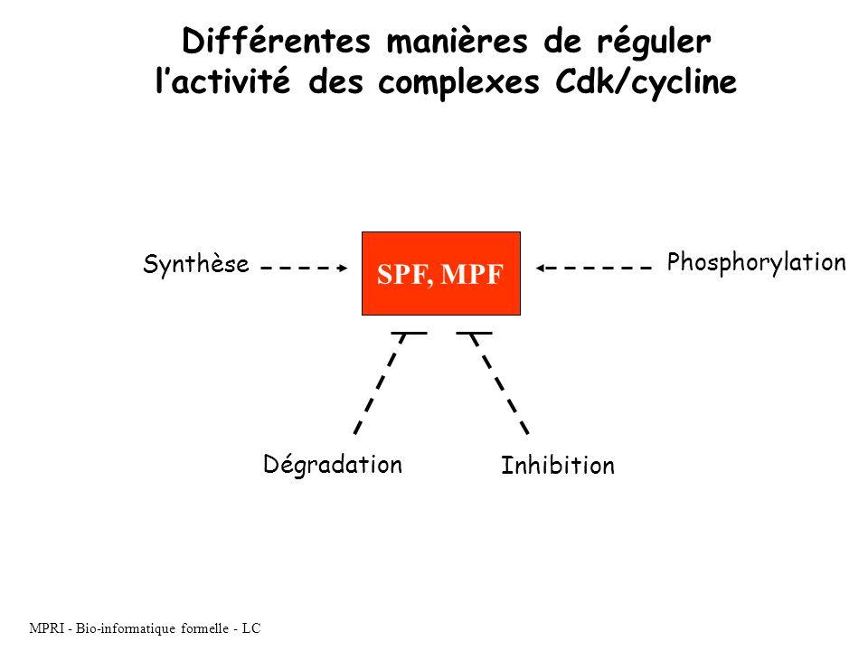 Différentes manières de réguler l'activité des complexes Cdk/cycline
