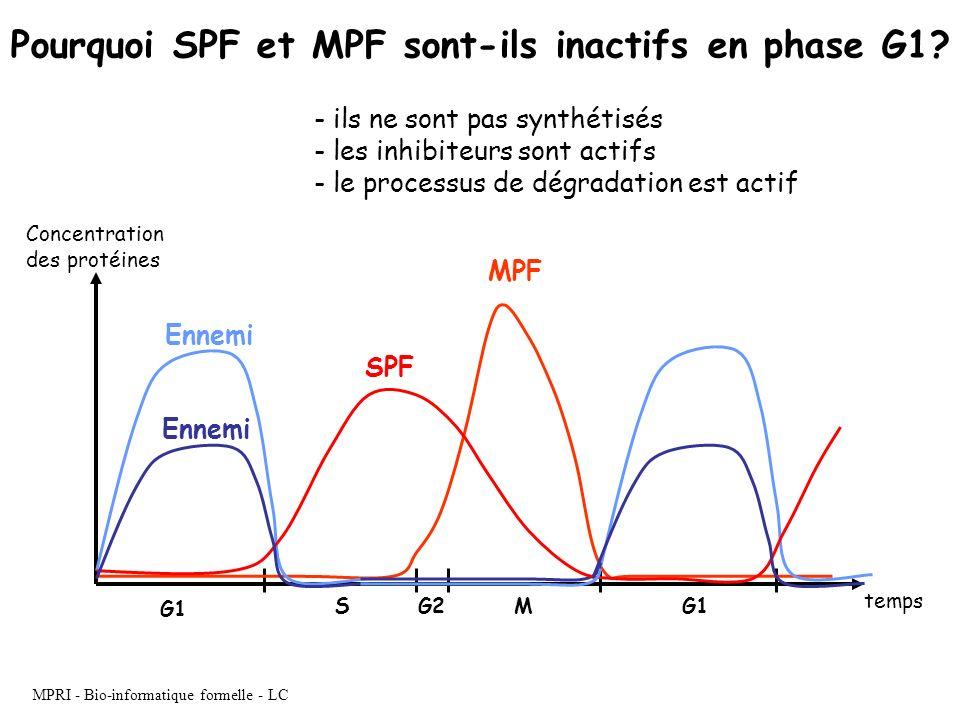 Pourquoi SPF et MPF sont-ils inactifs en phase G1