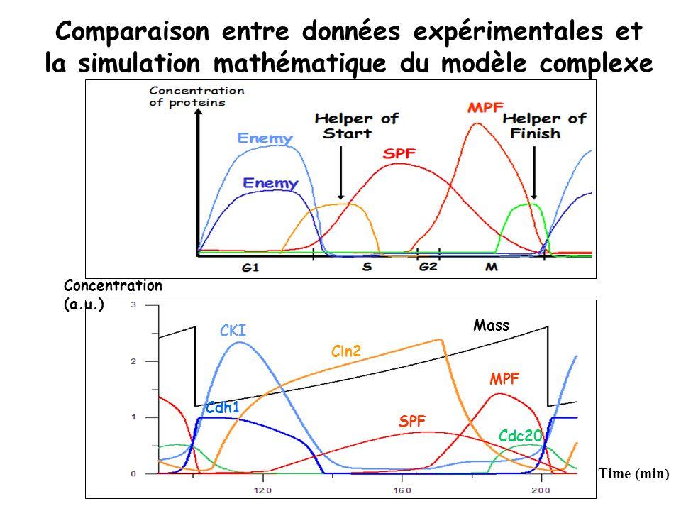 Comparaison entre données expérimentales et la simulation mathématique du modèle complexe