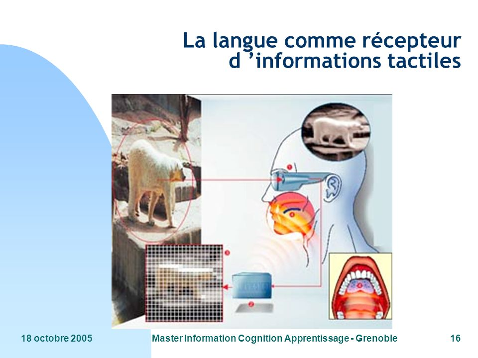 La langue comme récepteur d 'informations tactiles