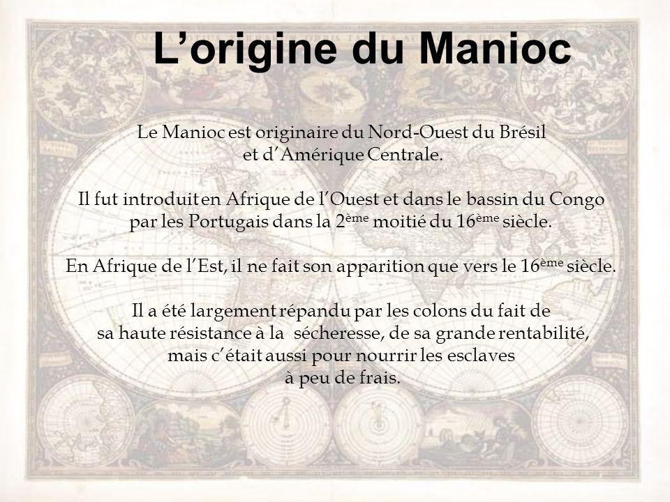 L'origine du Manioc Le Manioc est originaire du Nord-Ouest du Brésil