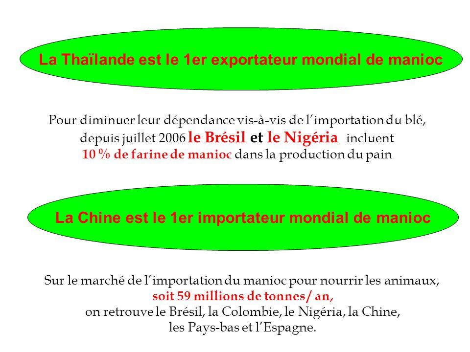 La Thaïlande est le 1er exportateur mondial de manioc