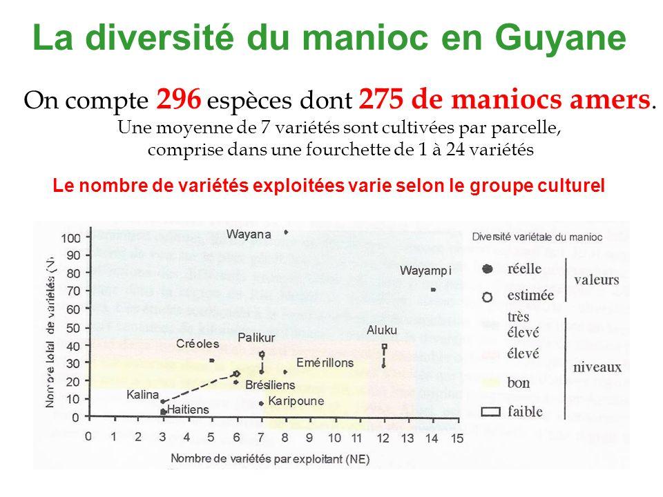 La diversité du manioc en Guyane