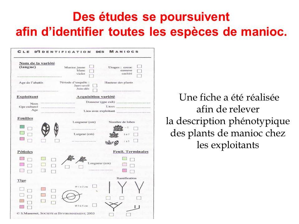 afin d'identifier toutes les espèces de manioc.