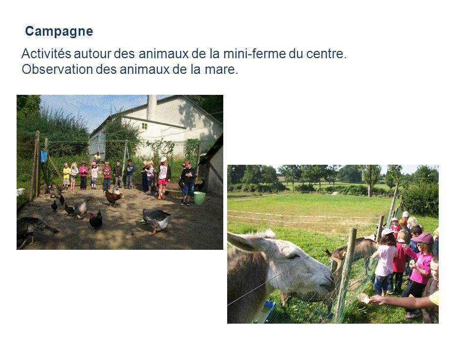 CampagneActivités autour des animaux de la mini-ferme du centre.
