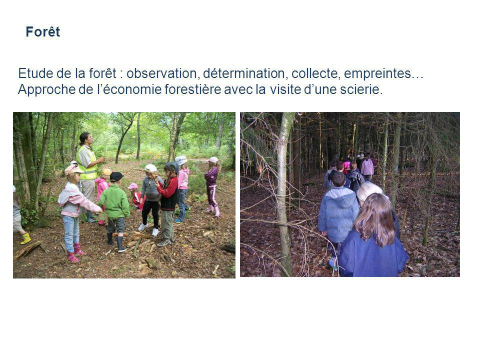 ForêtEtude de la forêt : observation, détermination, collecte, empreintes… Approche de l'économie forestière avec la visite d'une scierie.