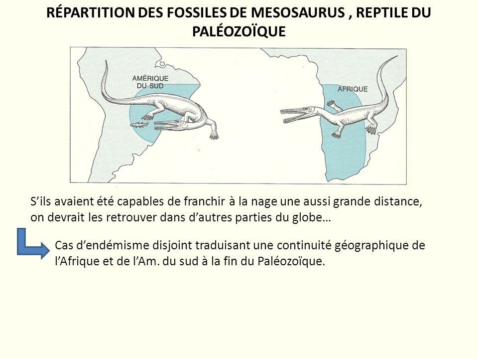 RÉPARTITION DES FOSSILES DE MESOSAURUS , REPTILE DU PALÉOZOÏQUE