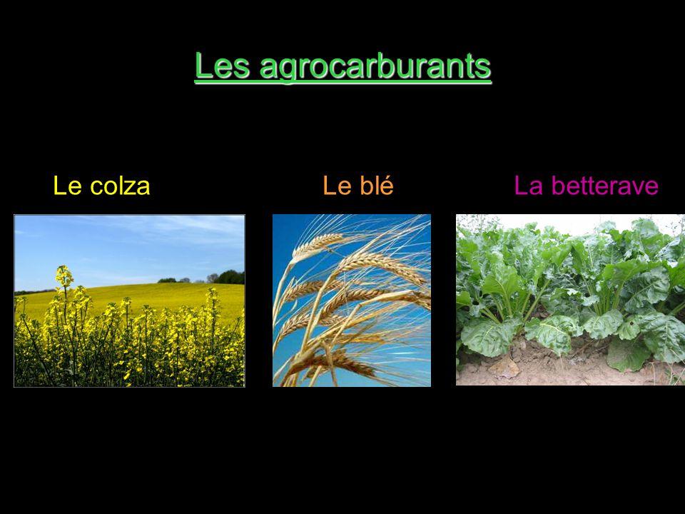 Les agrocarburants Le colza Le blé La betterave