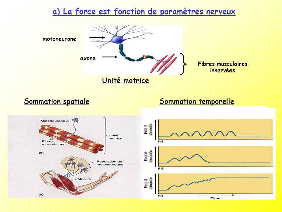 a) La force est fonction de paramètres nerveux