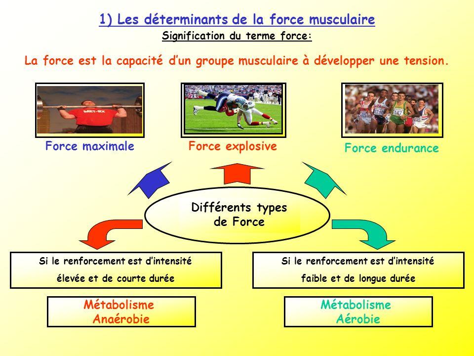 1) Les déterminants de la force musculaire