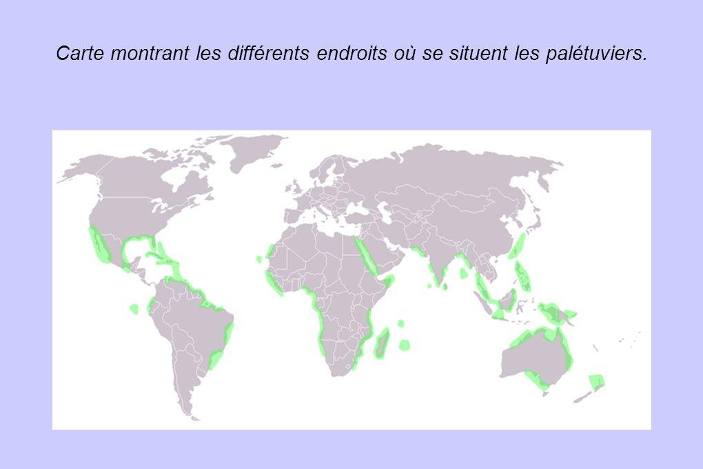 Carte montrant les différents endroits où se situent les palétuviers.