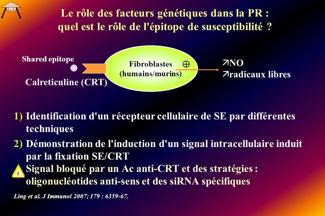 Fibroblastes (humains/murins)