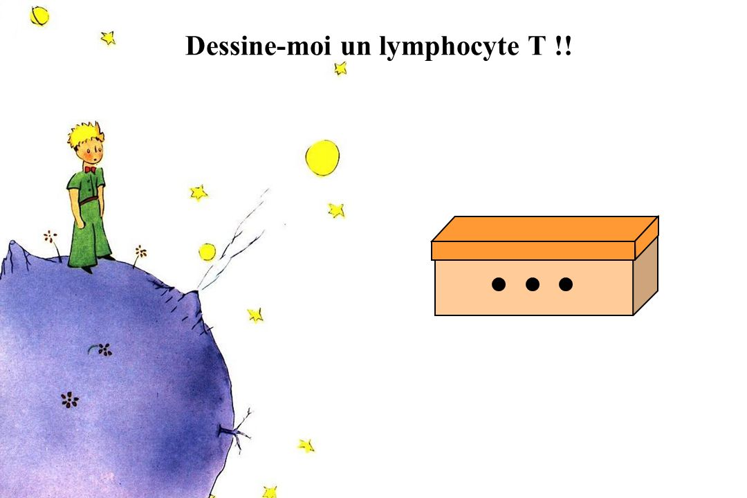 Dessine-moi un lymphocyte T !!