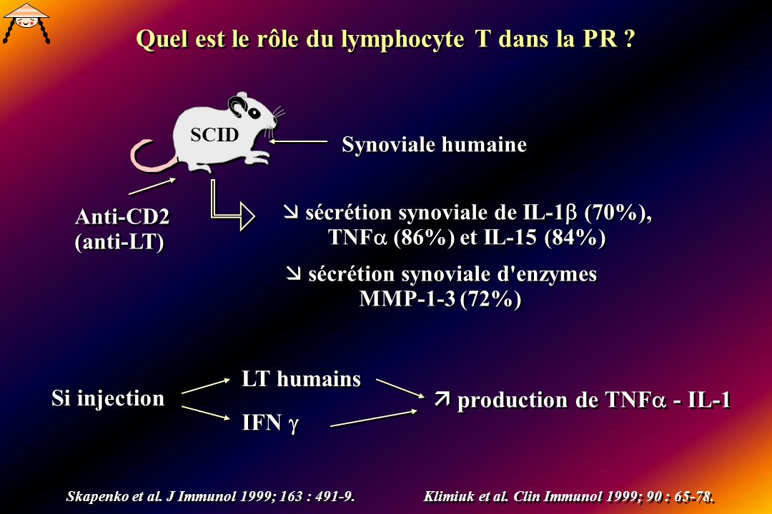 Quel est le rôle du lymphocyte T dans la PR
