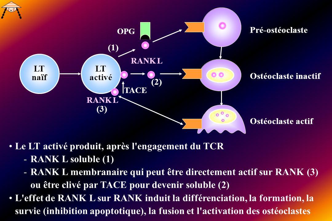 Le LT activé produit, après l engagement du TCR RANK L soluble (1)