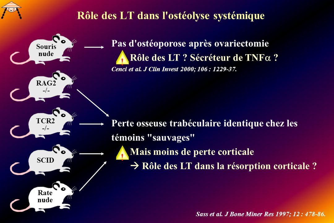 Rôle des LT dans l ostéolyse systémique