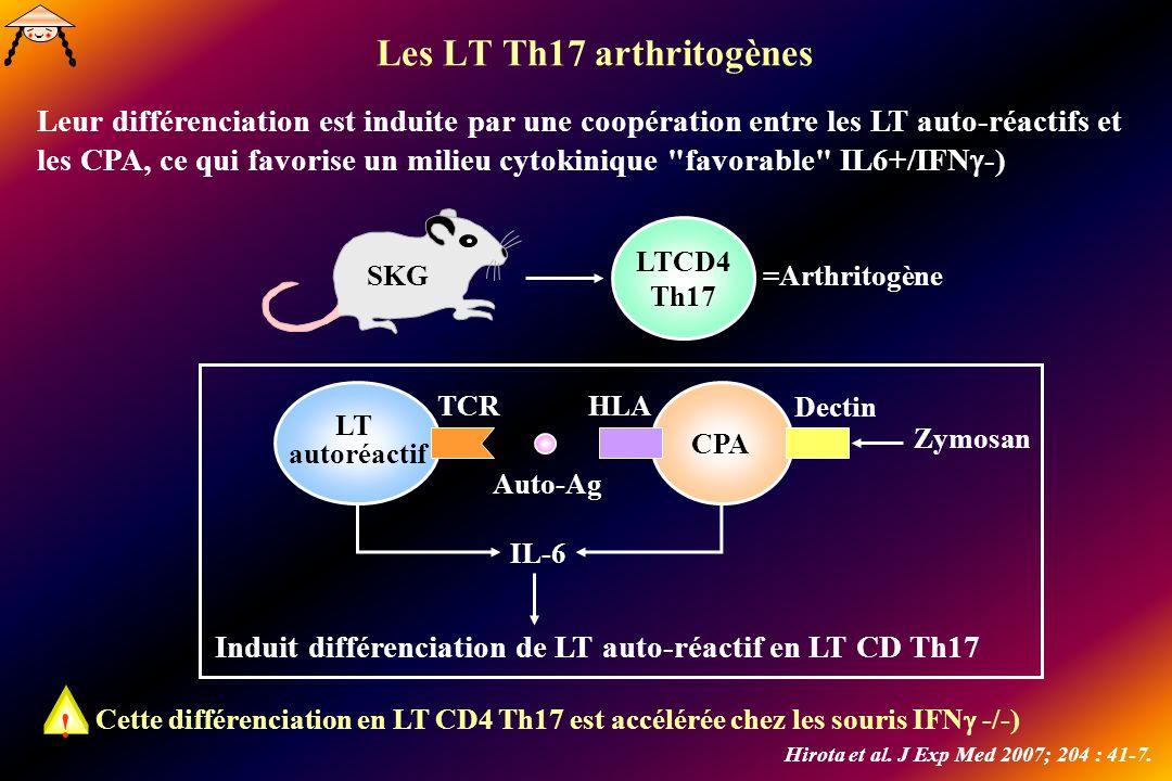 Les LT Th17 arthritogènes