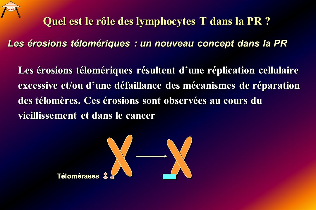 Quel est le rôle des lymphocytes T dans la PR