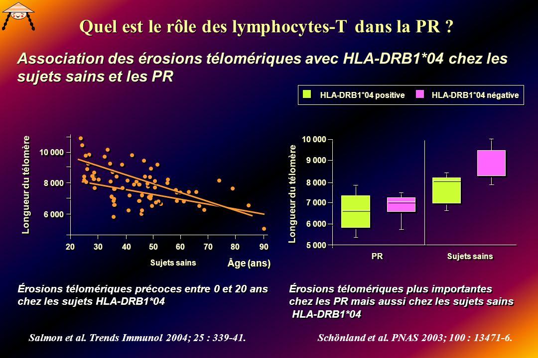 Quel est le rôle des lymphocytes-T dans la PR