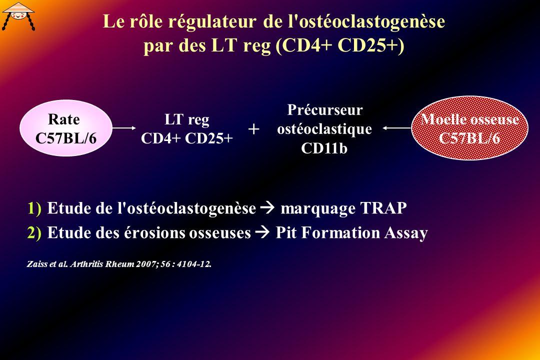 Le rôle régulateur de l ostéoclastogenèse par des LT reg (CD4+ CD25+)