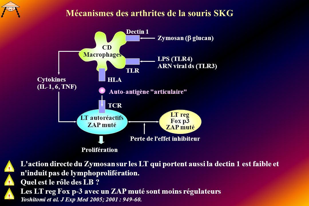 Mécanismes des arthrites de la souris SKG