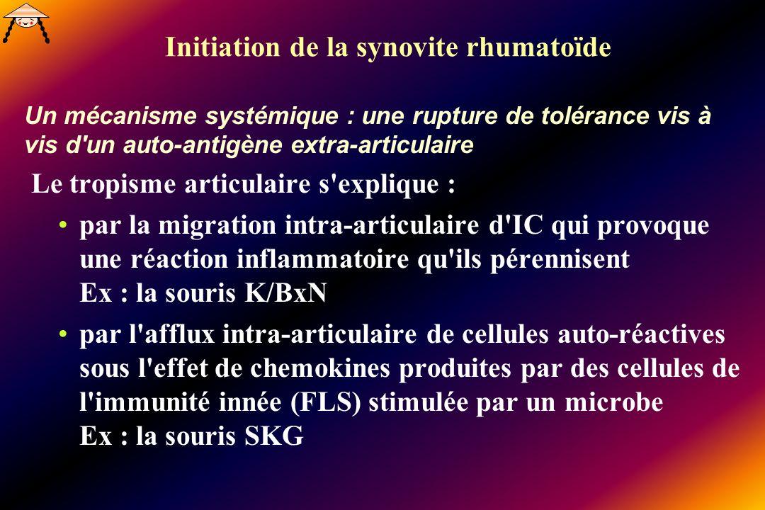 Initiation de la synovite rhumatoïde