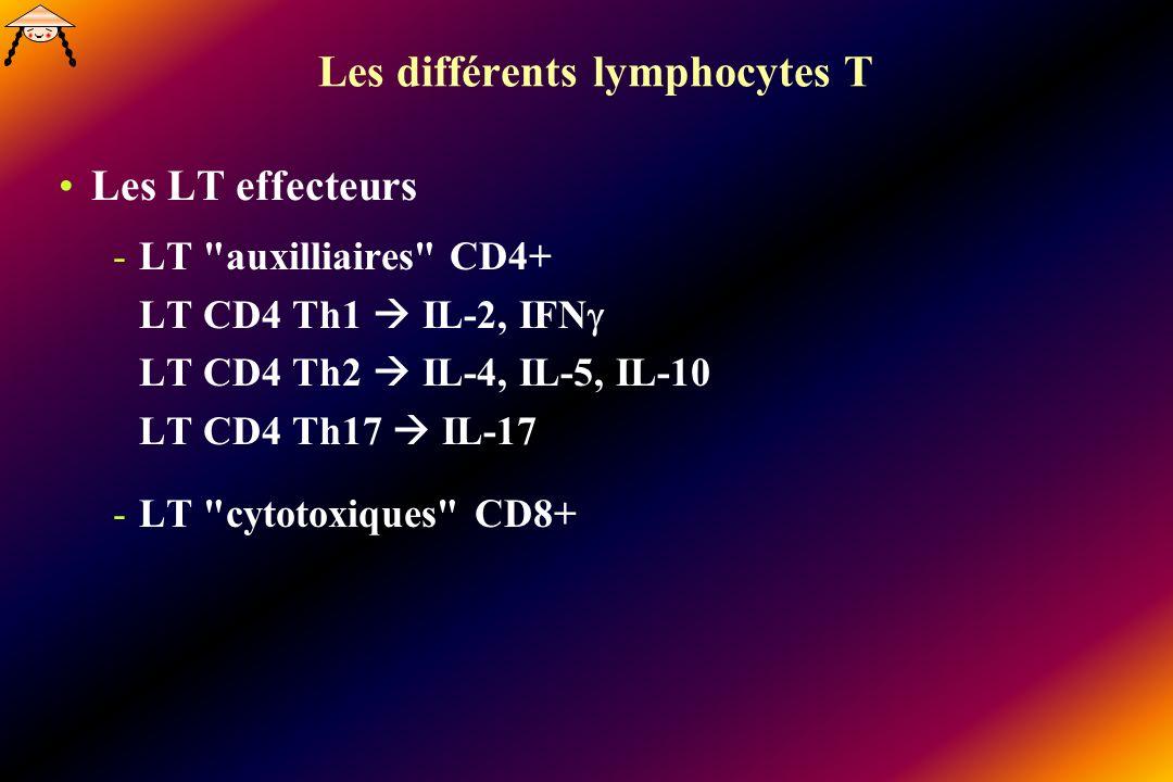 Les différents lymphocytes T