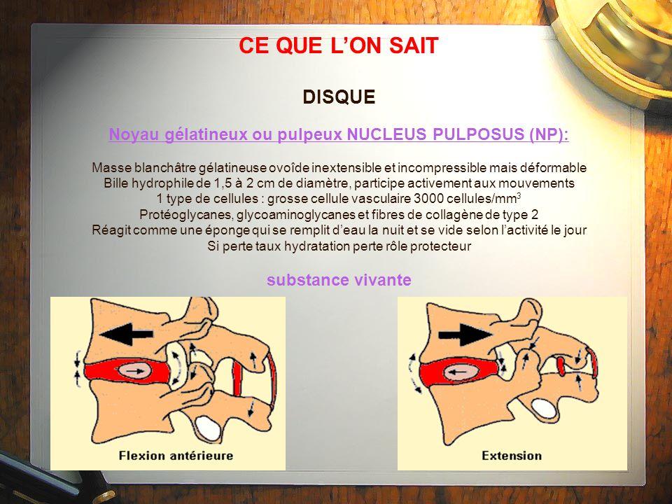 CE QUE L'ON SAITDISQUE. Noyau gélatineux ou pulpeux NUCLEUS PULPOSUS (NP):