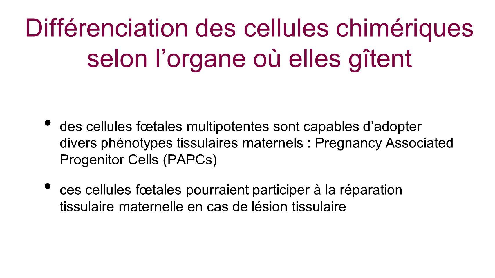 Différenciation des cellules chimériques selon l'organe où elles gîtent
