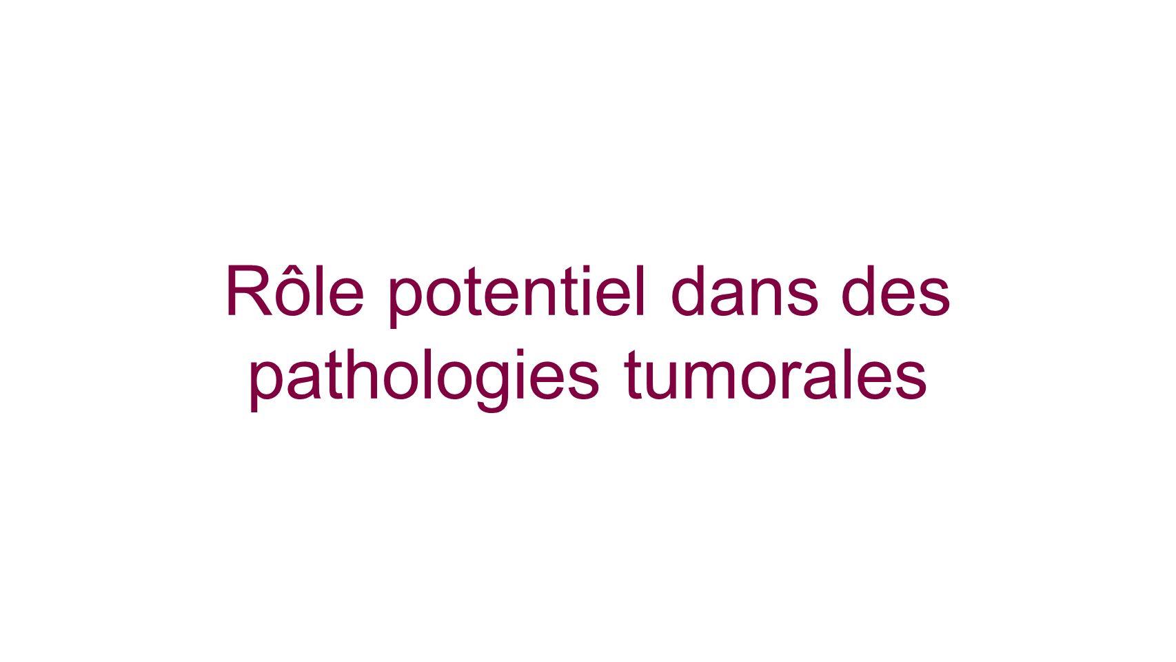 Rôle potentiel dans des pathologies tumorales