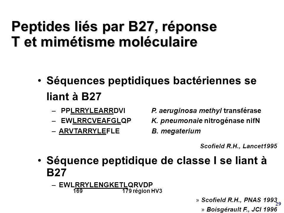 Peptides liés par B27, réponse T et mimétisme moléculaire