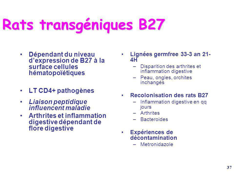 Rats transgéniques B27 Dépendant du niveau d'expression de B27 à la surface cellules hématopoïétiques.