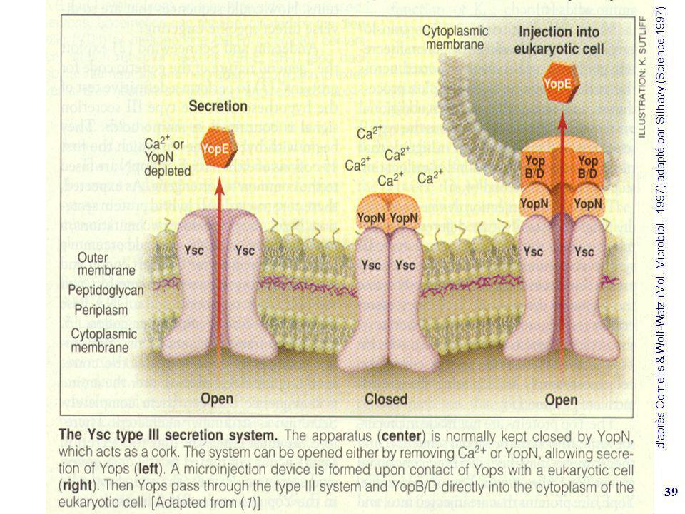 d après Cornelis & Wolf-Watz (Mol. Microbiol