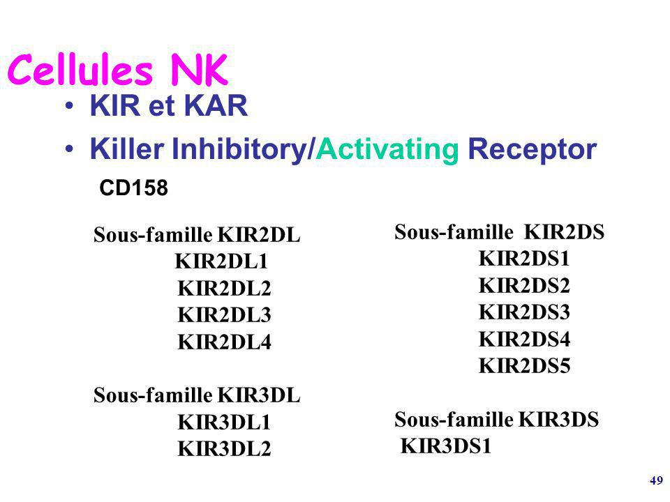 Cellules NK KIR et KAR Killer Inhibitory/Activating Receptor CD158