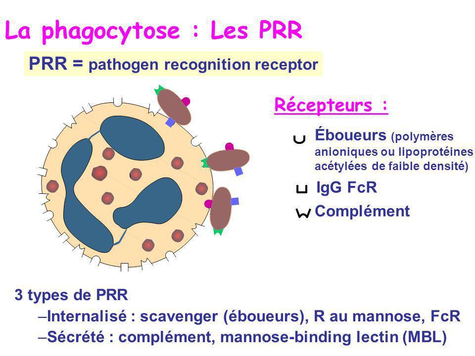 La phagocytose : Les PRR