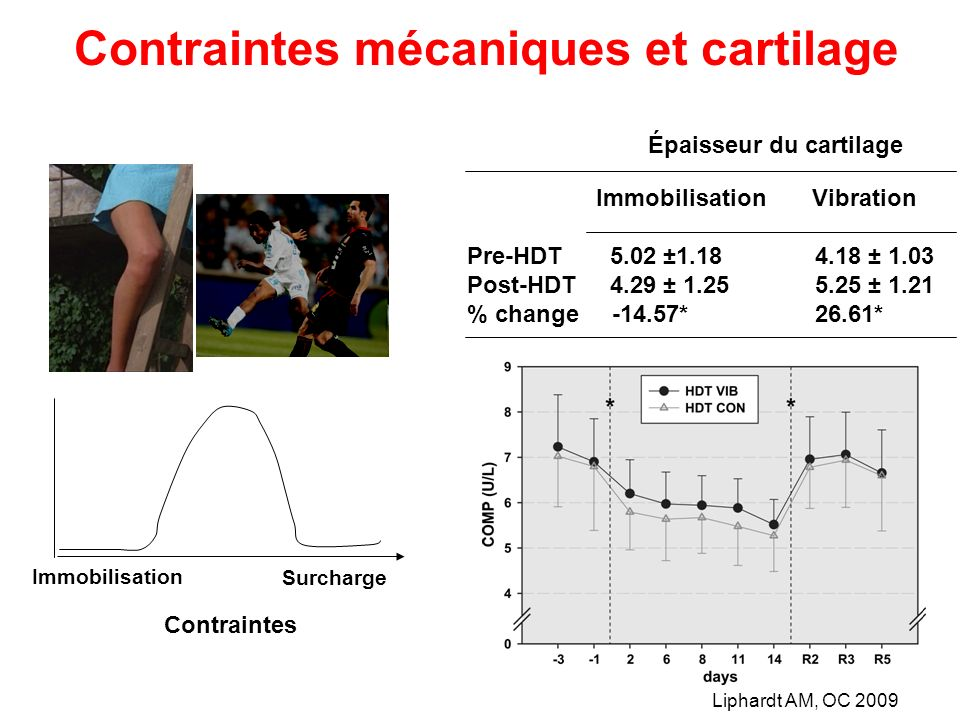 Contraintes mécaniques et cartilage