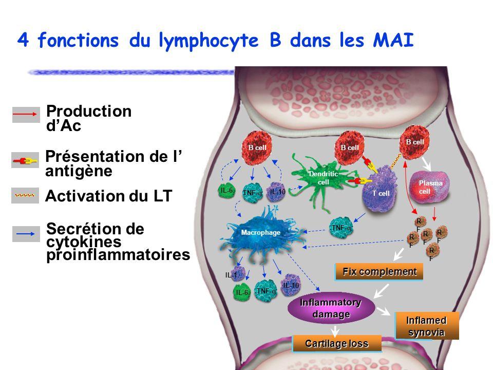 4 fonctions du lymphocyte B dans les MAI