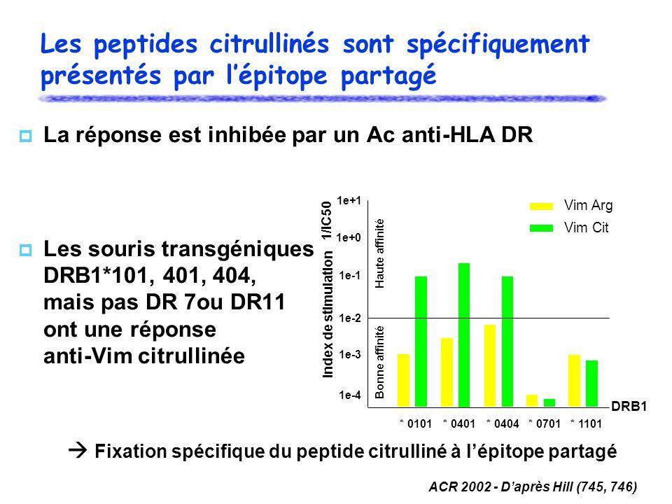 Les peptides citrullinés sont spécifiquement présentés par l'épitope partagé