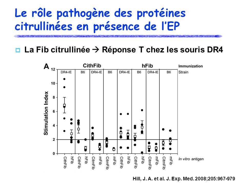 Le rôle pathogène des protéines citrullinées en présence de l'EP