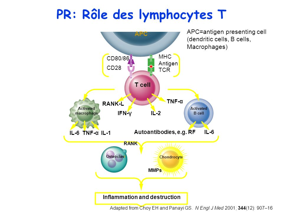 PR: Rôle des lymphocytes T