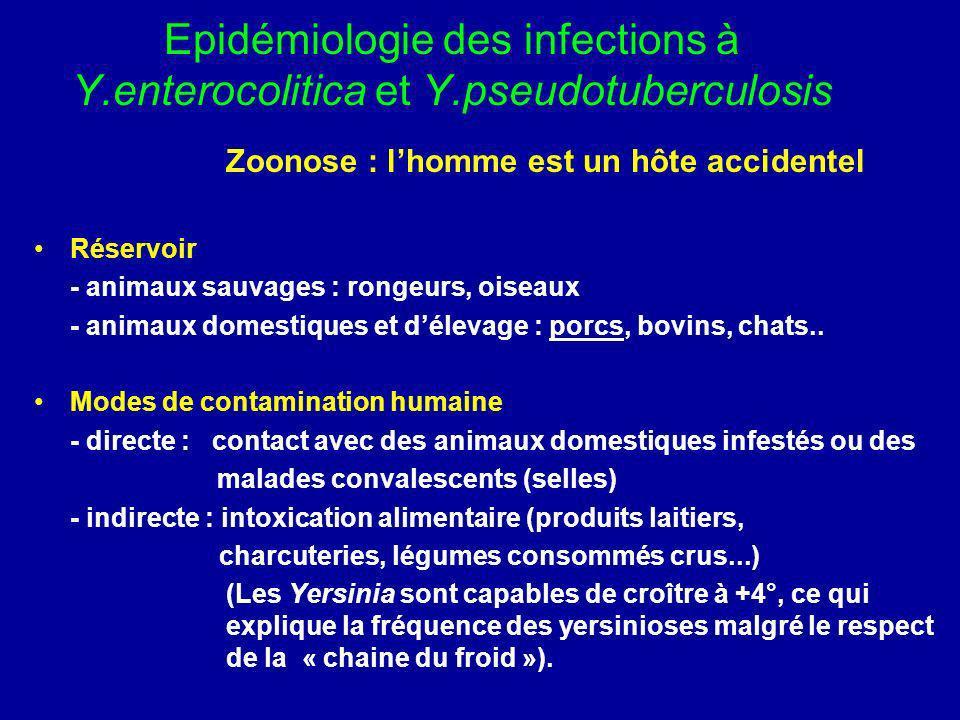 Epidémiologie des infections à Y. enterocolitica et Y