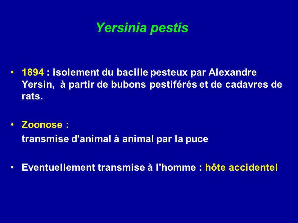 Yersinia pestis 1894 : isolement du bacille pesteux par Alexandre Yersin, à partir de bubons pestiférés et de cadavres de rats.
