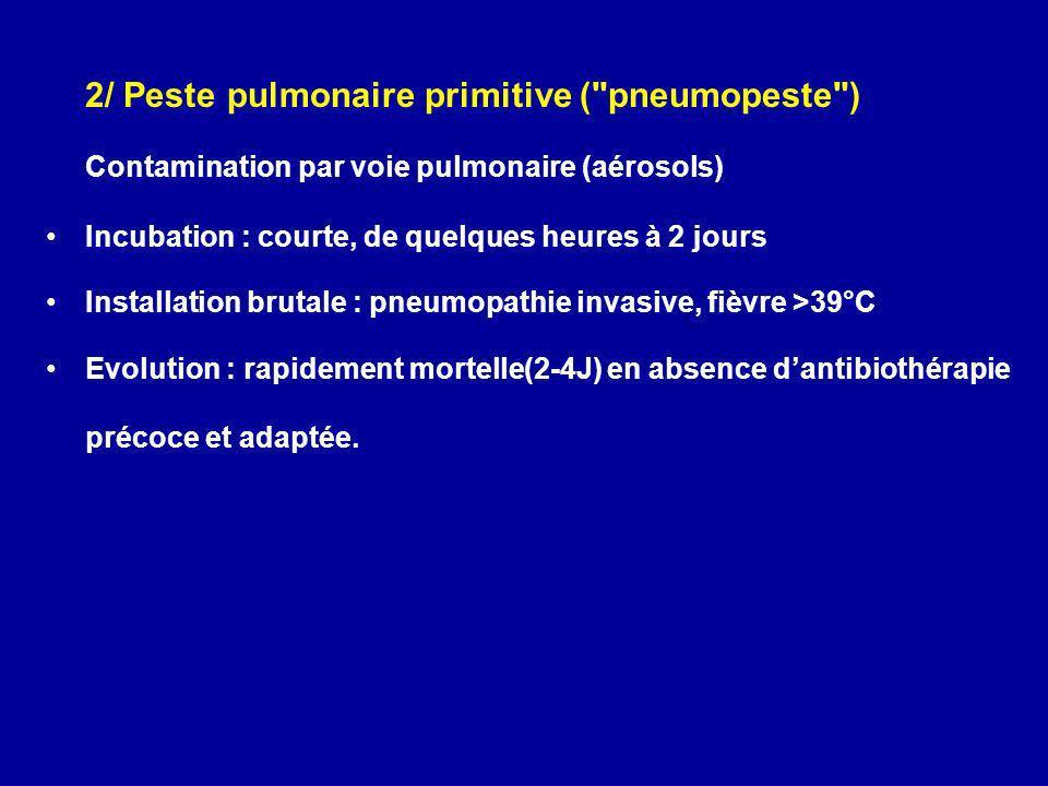 2/ Peste pulmonaire primitive ( pneumopeste )