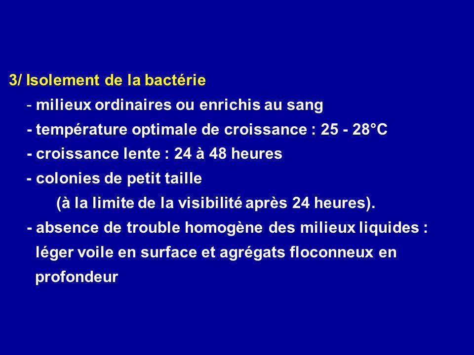 3/ Isolement de la bactérie - milieux ordinaires ou enrichis au sang