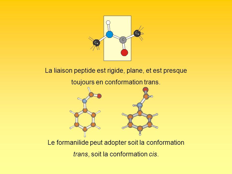 La liaison peptide est rigide, plane, et est presque