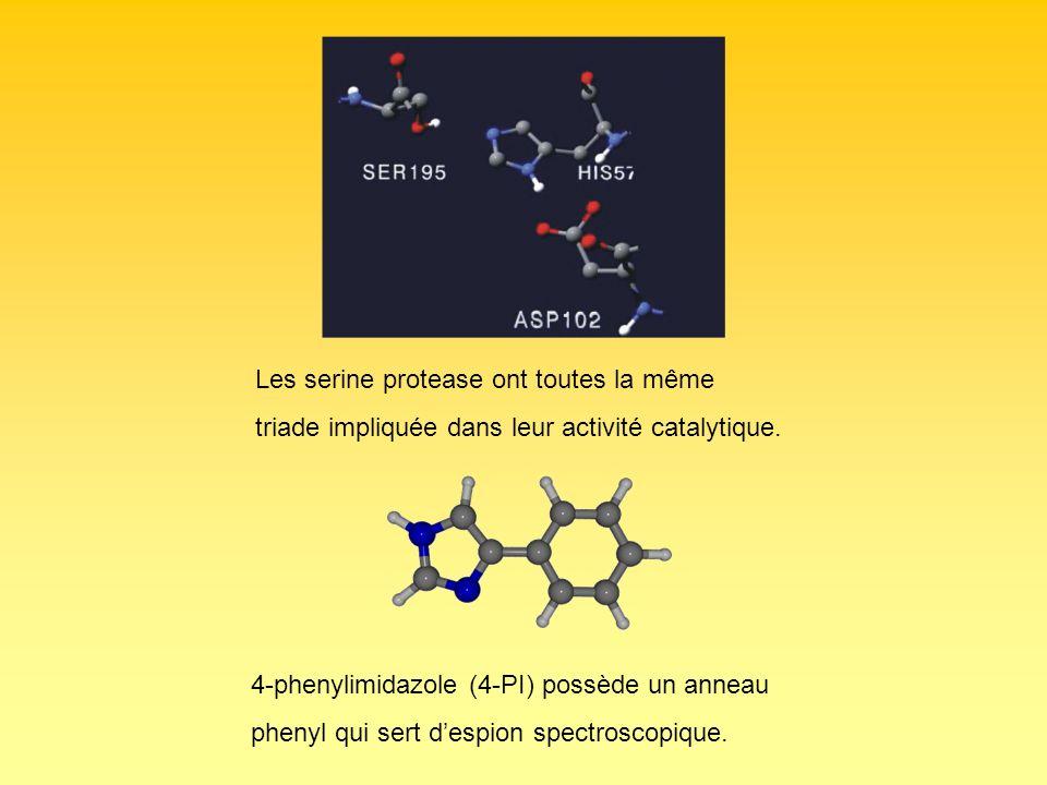 Les serine protease ont toutes la même