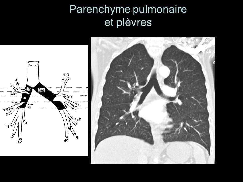 Parenchyme pulmonaire